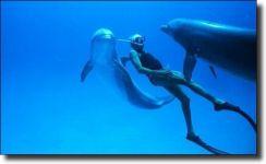 Διαβάστε περισσότερα: Dolphin Man