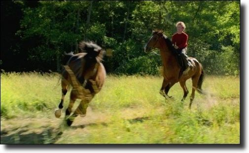 b_505X0_505X0_16777215_00_images_1819_out-stealing-horses.jpg